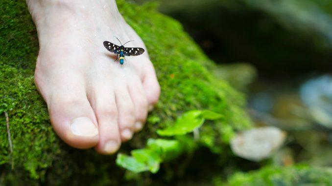 pied-nature